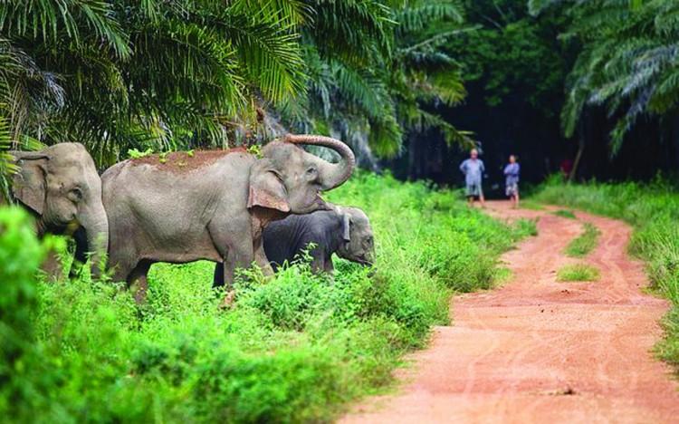 الفيل عدو النحل