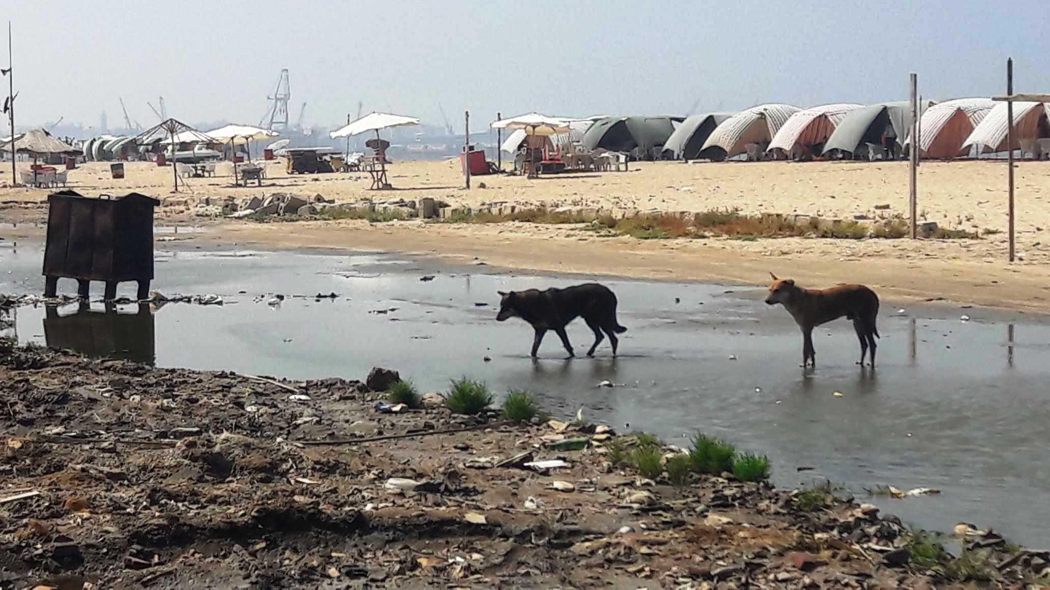 أضبط مخالفة  كارثة  مياه المجارى تصب فى شاطئ بورفؤاد ...