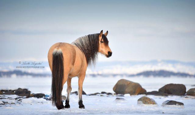 مصورة ترصد حركات الحصان الانفعالى