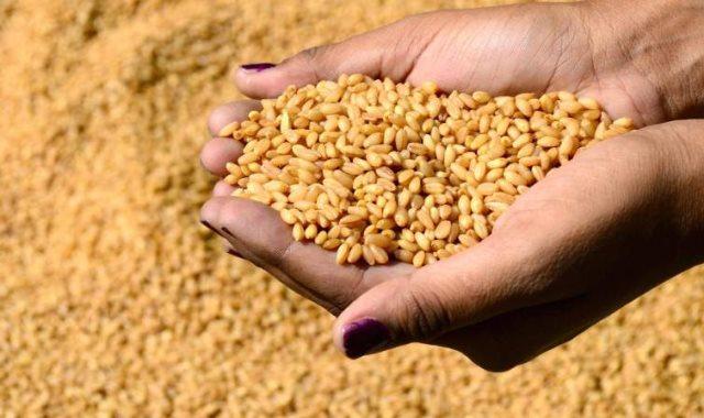 وزير تجارة العراق: شراء 2.5 مليون طن قمح محلى من المزارعين