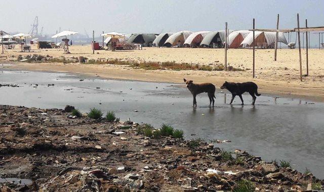شاطئ بور فؤاد