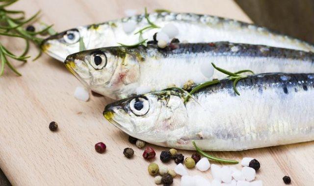 سمك السردين