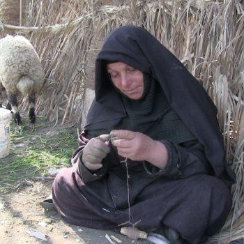 عيد الأم فى الحقول