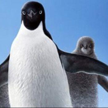 فيلم Penguins
