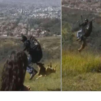 سقوط كلب