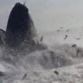 الحوت أثار اضطراب الصياد