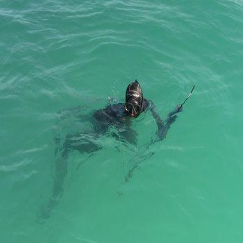 صيد سمك