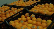 صادرات محصول البرتقال