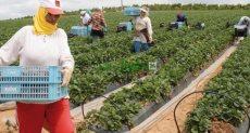 الزراعة في المغرب