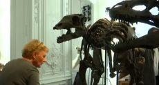 هياكل ديناصورات