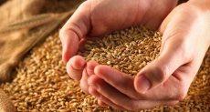 استيراد القمح