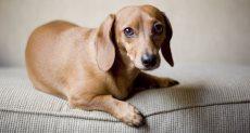 تربية الكلاب فى المنزل مفيدة