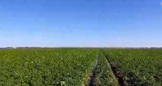 الزراعية