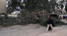 سقوط الشجرة