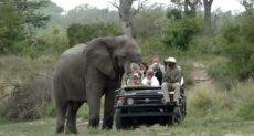فيل يهاجم سياح