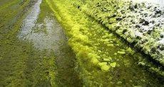 ثلوج خضراء