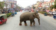 فيل تائه في شوارع مدينة صينية