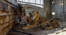 حديقة حيوان - ارشيفية