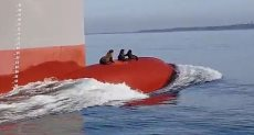 كلاب البحر على ماخر السفينة