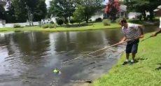 جانب من عملية إنقاذ التمساح