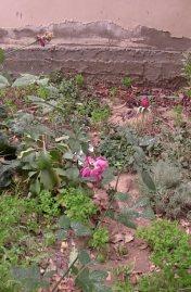 جانب من الأعشاب المستخدمة فى فن التجميل