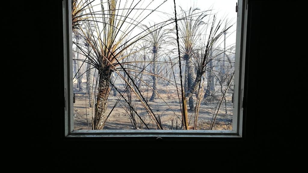 اللقطات الأولى لخسائر حريق الراشدة  (7)