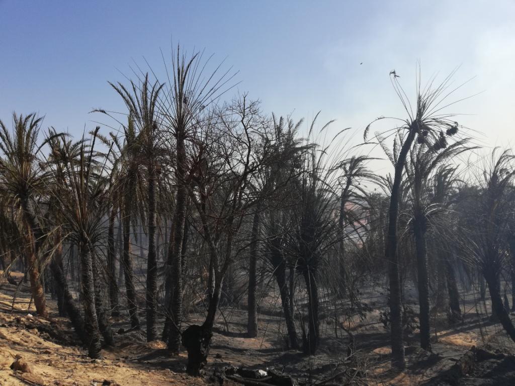 اللقطات الأولى لخسائر حريق الراشدة  (13)