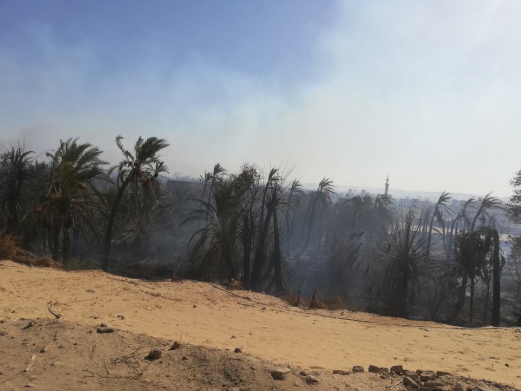 اللقطات الأولى لخسائر حريق الراشدة  (14)