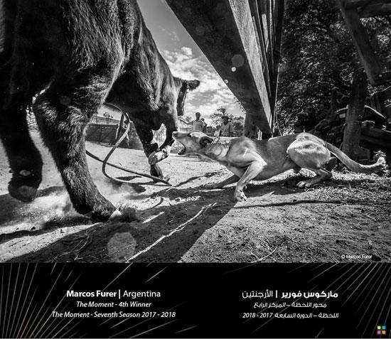 87591-صور-جائزة-دبي-للتصوير-الضوئى-(5)