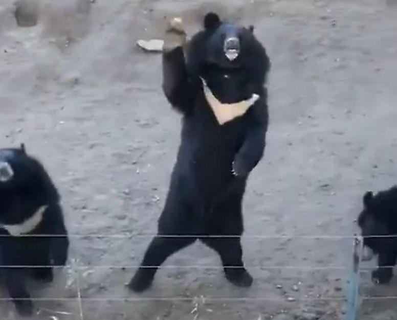 medvedi-poprivetstvovali-turistov-iz-za-izgorodi-volera-v-zooparke-foto-big