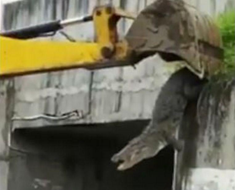 indiiskie-poselency-spasaja-krokodila-chut-ne-pogubili-bednuyu-reptiliyu-foto-big