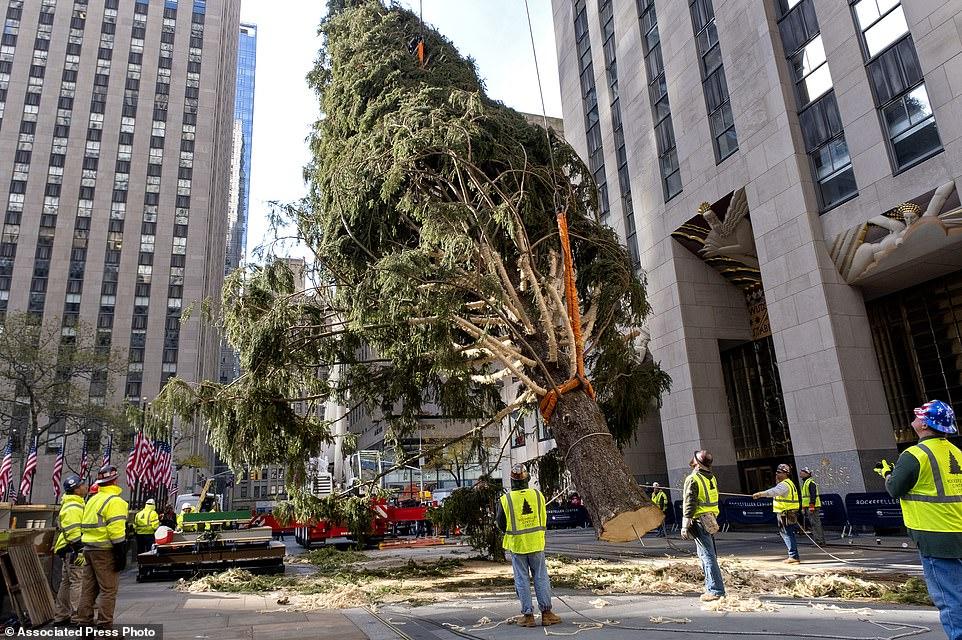العمال أثناء تثبيت الشجرة
