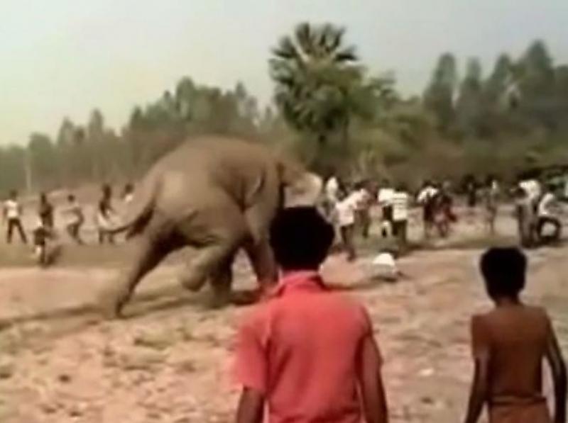 indiiskii-naglec-vyvel-na-emocii-dikogo-slona-i-chudom-ne-pal-ot-ego-nog-foto-big