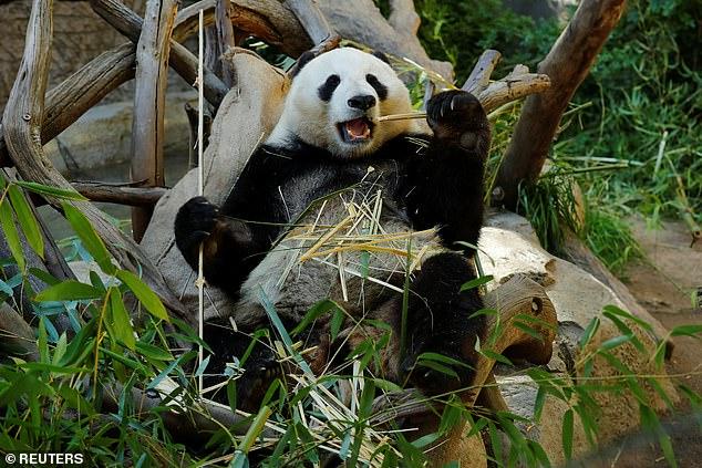90672-الصين-تستعدى-الدببة-من-أمريكا-بعد-23-عاما-(1)