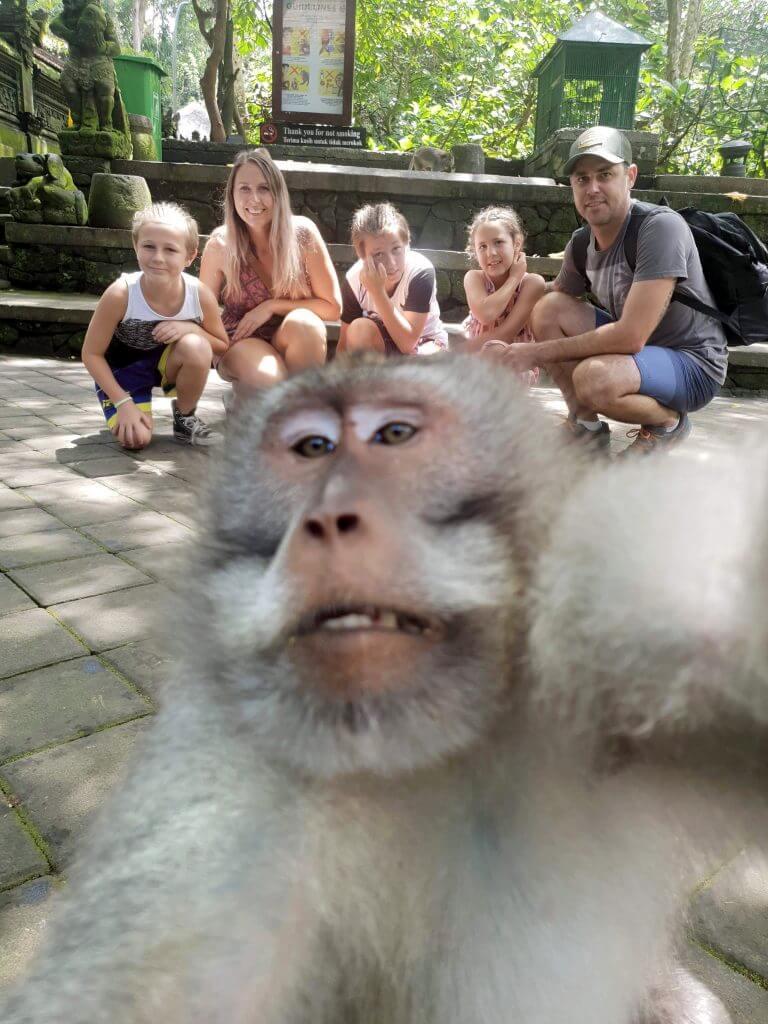 obezjana-staschila-kameru-i-sdelala-neprilichnoe-selfi-s-turistami-na-zadnem-plane-foto1-big