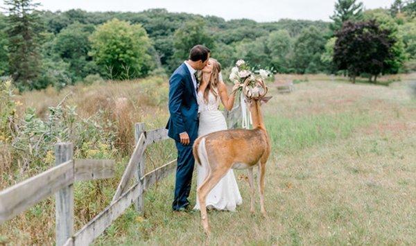 10092019-wedding-deer-6