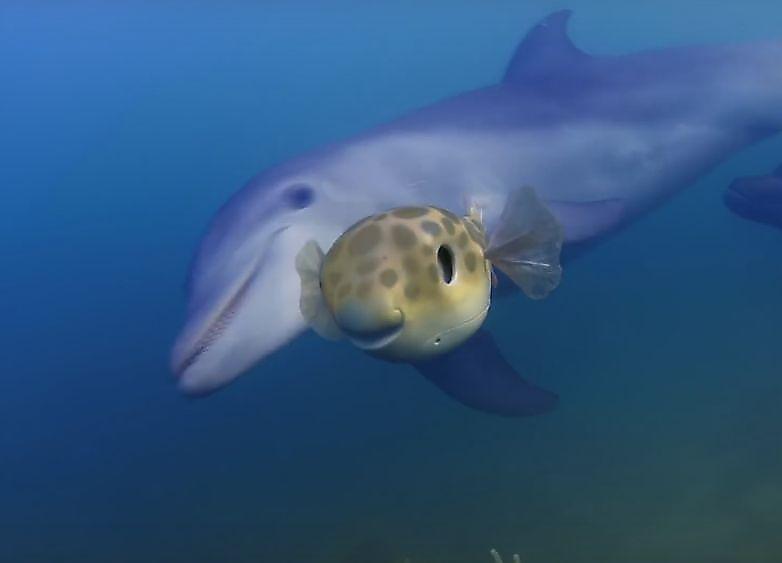 lyubopytnye-delfiny-izuchili-rybu-i-cherepahu-shpionivshih-za-nimi-foto-big