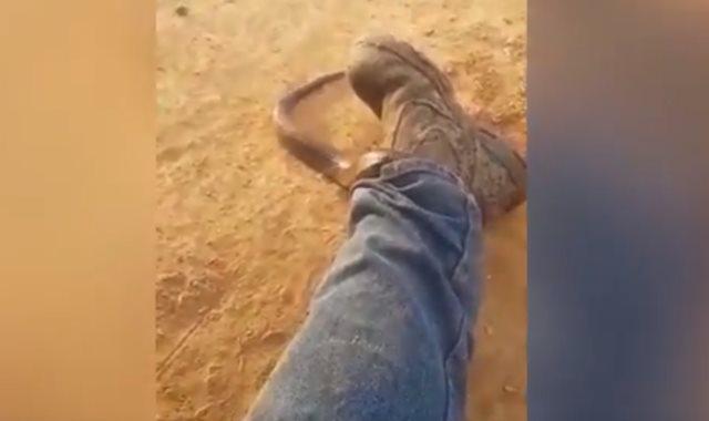 ثعبان يلتف حول ساق رجل