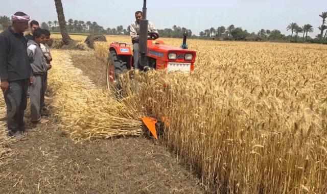 محصول القمح