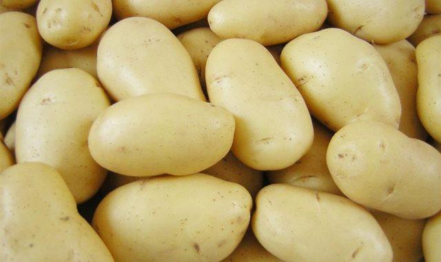 بطاطس - أرشيفية