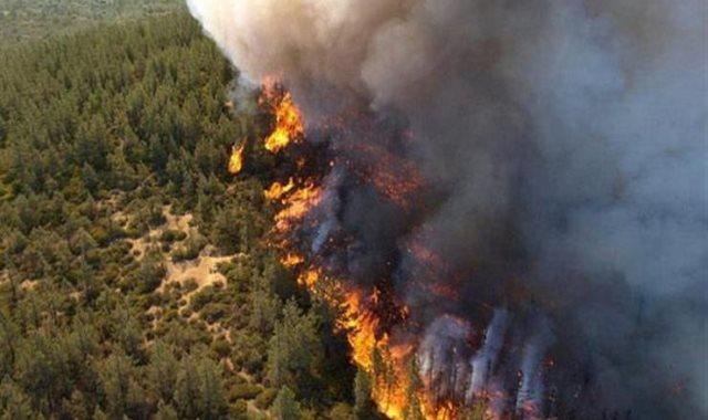 حرائق غابات - أرشيفية