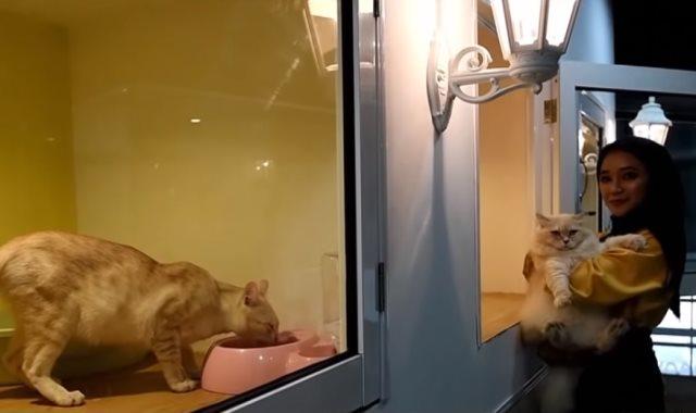 فندق لاستقبال القطط المدللة بماليزيا