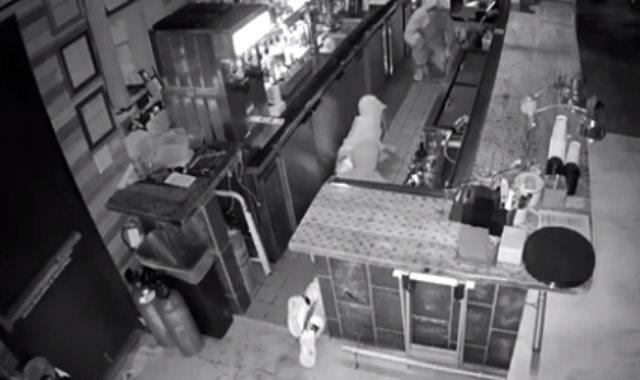 """هجوم """"عصابة الديدان"""" على مطعم أمريكي"""