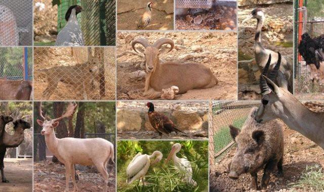حديقة الحيوانات بالجيزه - أرشيفية