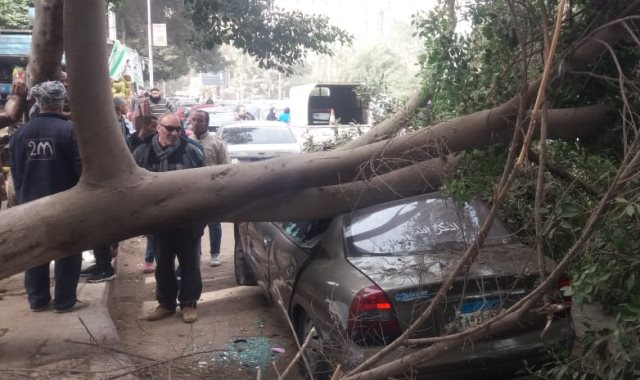 سقوط شجرة بسبب قوة الرياح