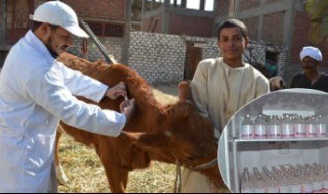 ماشية