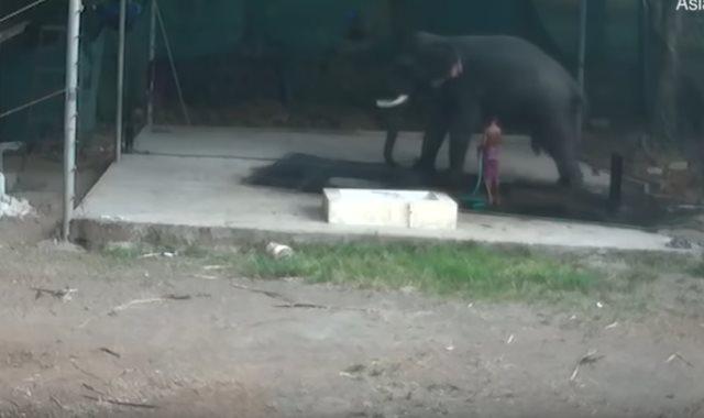 فيل ينتقم من مدرب