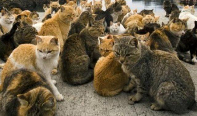 جزيرة القطط