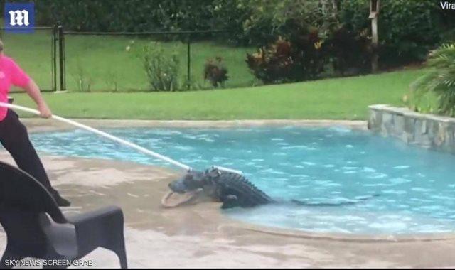 تمساح بحمام سباحة