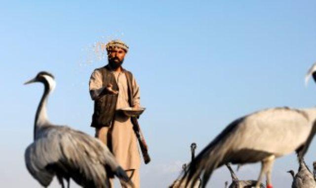 صائد الطيور الافغانى
